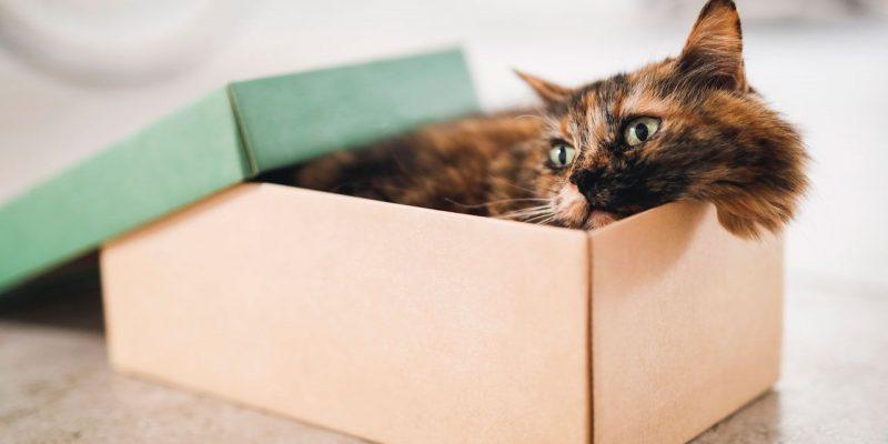 gato-caja-XxXx80